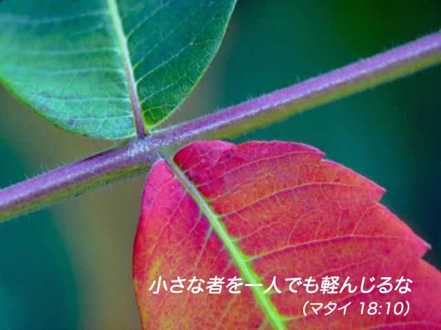 2015年07月13日の聖書の言葉